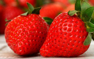Des fraises pour les balèzes !
